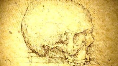 Anatomyart