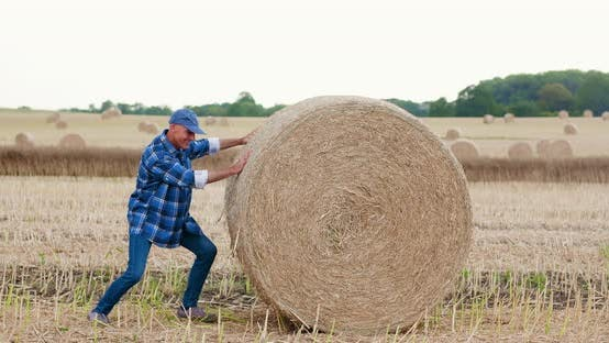 Thumbnail for Farmer Struggling While Rolling Hay Bale at Farm