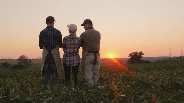 Thumbnail for Family of Farmers Watching the Sunset in the Field