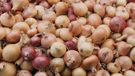 Thumbnail for Slider Shot: The Harvest of Onions Lies on the Ground.