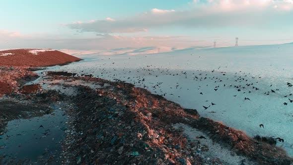 Crows at a City Dump