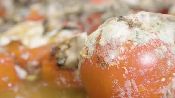 Thumbnail for Undesirable Mold on Cherry Tomatoes Which Lies on Plate