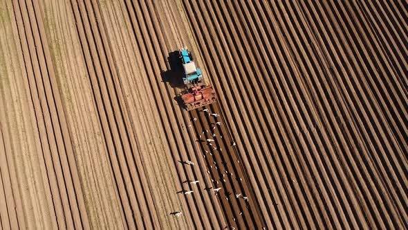 Thumbnail for Landwirtschaftliche Arbeit an einem Traktor Bauer Saut Getreide