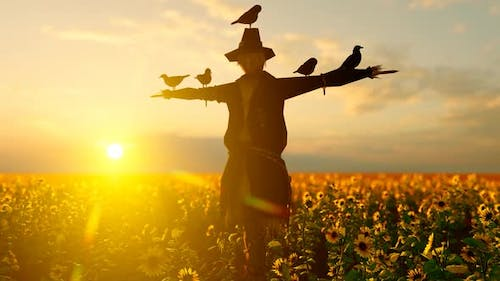 Fearless Birds Standing on Scarecrow