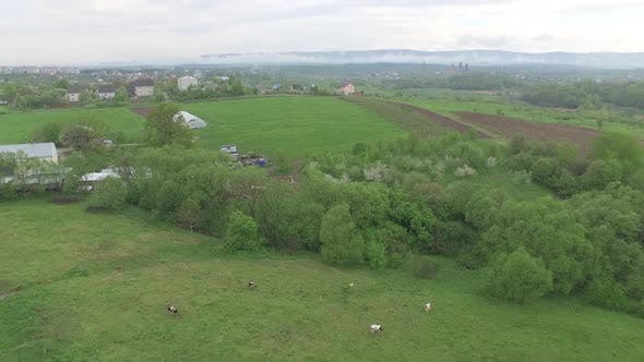 Thumbnail for Small Village Outside City. Pets Graze in Meadow, Aerial View