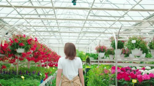 Female Florist Walking at Greenhouse with Colorful Flowers