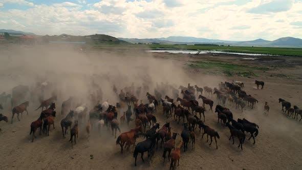 Thumbnail for Horses 11