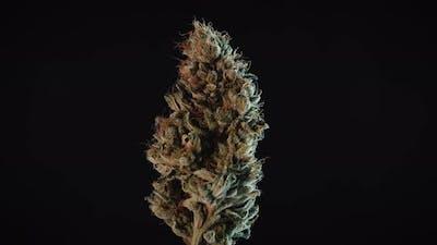 Weed Nug Spinning On Macro Studio Display Loop