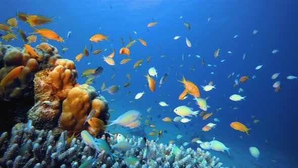 Thumbnail for Marine Life Tropical Fish Garden
