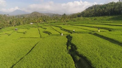 Rice Terraces and Agricultural Land in Indonesia