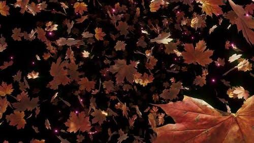 Maple Leaves Fall 04 HD