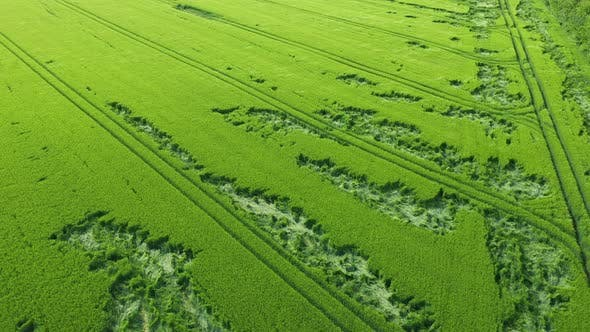 Thumbnail for Aerial View Green Wheat Field