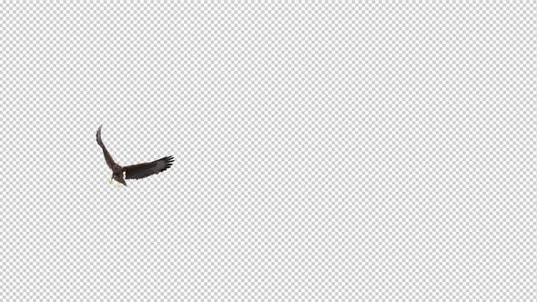 Tropical Kite - Flying Transition - I