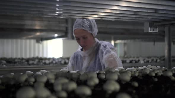 Woman Worker Collects Crop of Porcini Mushrooms While Standing in Dark Room Spbd