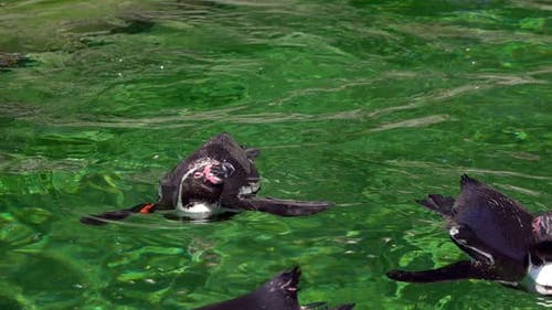 Animal Penguin In Green Pure Water 3