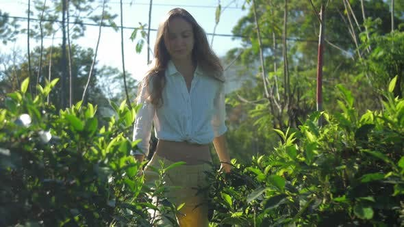 Thumbnail for Attractive Girl Wades Through Green Tea Bushes Slow Motion