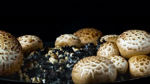 The Rapid Growth of Champignons