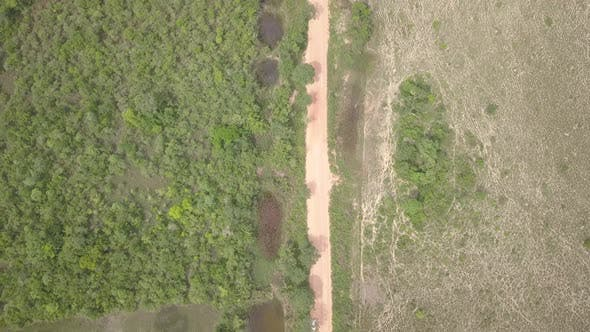 Savannah Pantanal Dry Season Transpantaneira Highway Wilderness