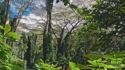 Rainforest Green Canopy