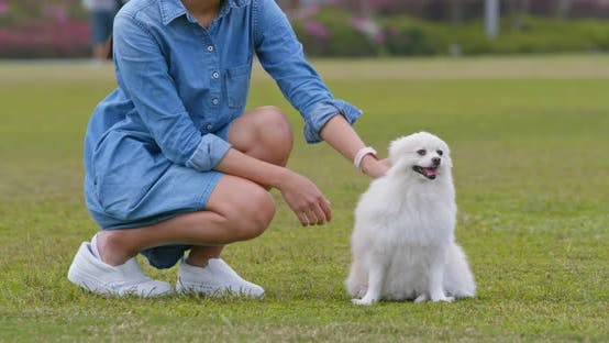 Thumbnail for Woman Play with Her Pomeranian Dog at Park