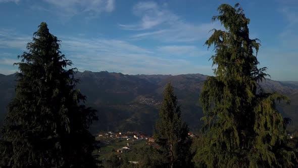 Thumbnail for Mountain Trees