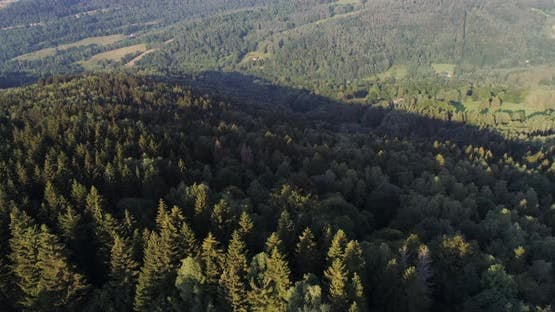 Blue Sky and Forest Drone Shot From Above