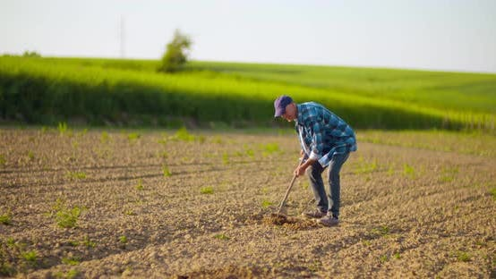 Cover Image for Farmer Using Hoe on Dirt at Farm