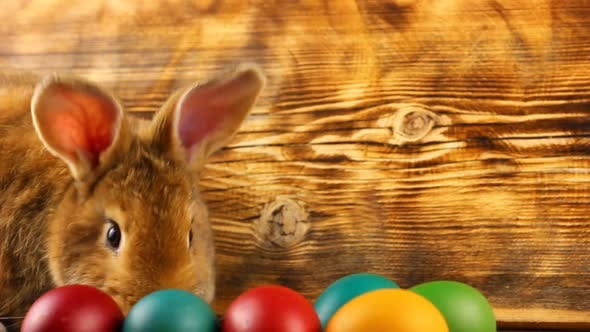 Curious Little Fluffy Brown Bunny Sits on a Wooden Background with Multicolored Painted Easter Eggs