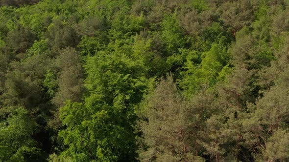 Thumbnail for AERIAL: Slow Establishing Shot of Rich Green Forest Tree Tops in Germany European Woods in Beautiful