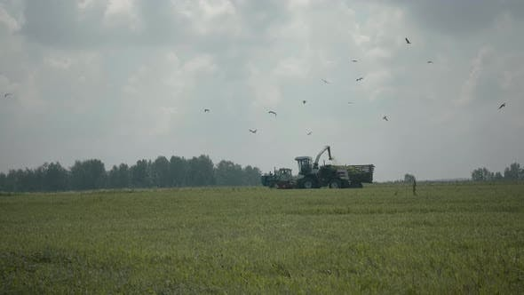 Thumbnail for Combine Harvester In Field