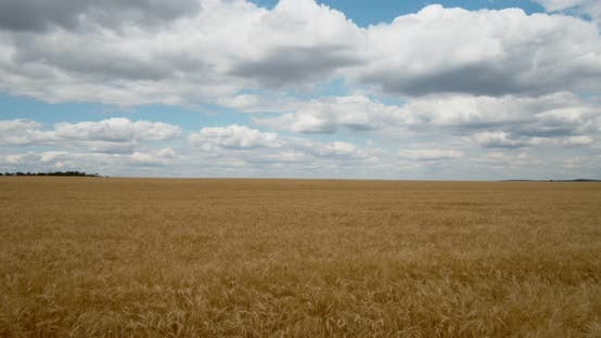 Thumbnail for White clouds float above the wheat field