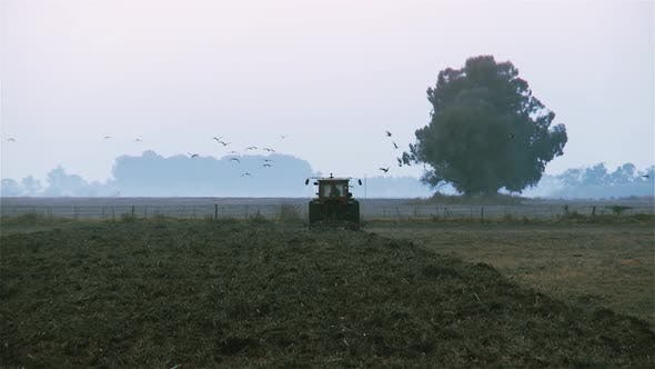 Thumbnail for A Farmer on a Tractor Plowing the Land, Surrounded by Birds.