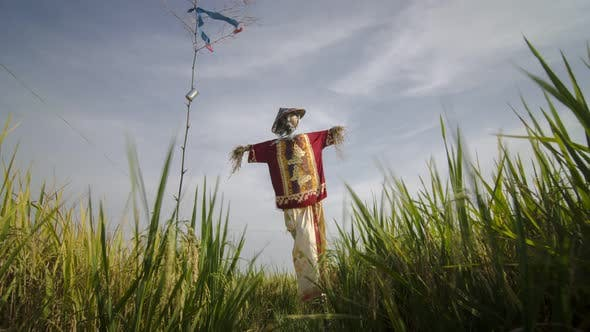Scarecrow in the rice paddy in Malaysia in the shape of a human.