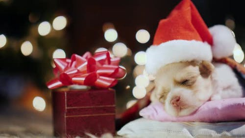 Gift for a Little Puppy Baby for Christmas