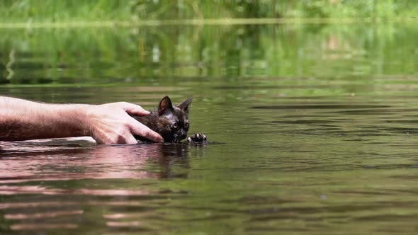 Thumbnail for The Cat Swims in the River. Man Teaches Kitten To Swim in the Water. Slow Motion