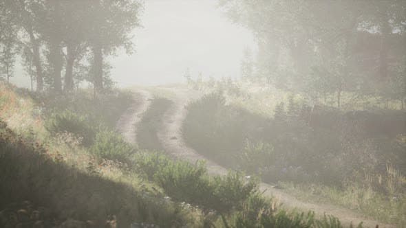 Thumbnail for Sunbeams Entering Coniferous Stand on a Misty Summer Morning