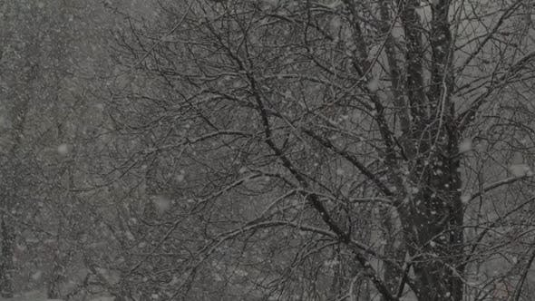 Thumbnail for Snowfall in the City During the Day. Kyiv. Ukraine. Slow Motion