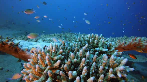 Cover Image for Tropical Underwater Blue-Green Fish