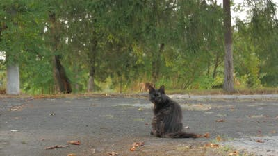 Homeless Cat Portrait