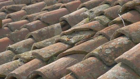 Thumbnail for Old looking natural clay roofing material 4K 2160p UHD panning  footage - Roof top tiles old materia