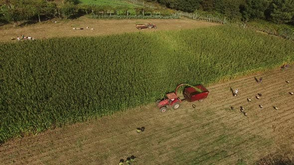 Thumbnail for People and Industrial Machines Working in the Corn Field