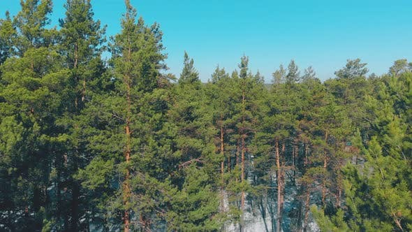 Thumbnail for Green Endless Pine Forests Against Red and Blue Buildings