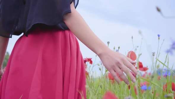 Thumbnail for Female Hand Running Through Poppies Field