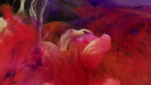 Thumbnail for Rose veiled by ink