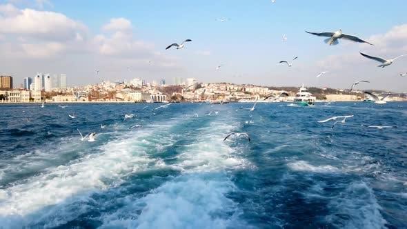 Thumbnail for Flock Of Seagulls Over Bosphorus