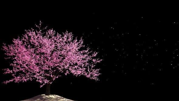 Cherry Blossom 03 Alpha HD