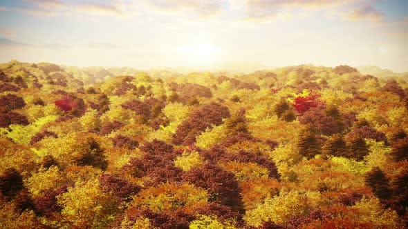 Thumbnail for Aerial Over Autumn Forest At Sunset