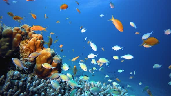Thumbnail for Fish Blue Sea Water