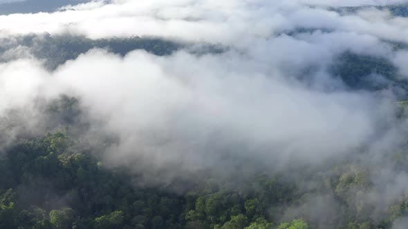 Aerial view over a tropical forest coverd in patches of fog