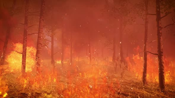Wildfire 4K